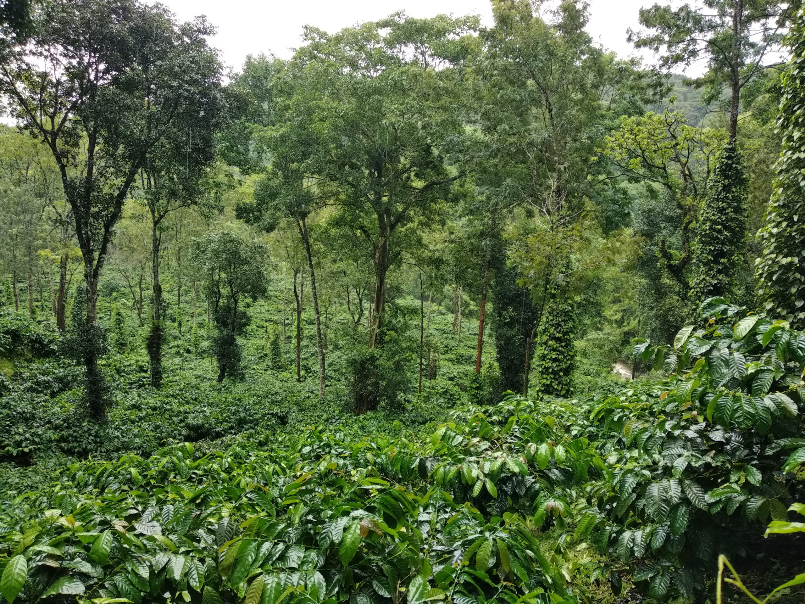 Coorg in the Rains